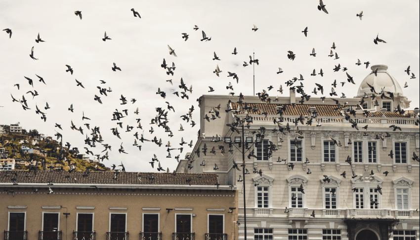 Recorrido por las calles de Quito