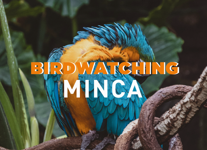 Birdwatching Minca