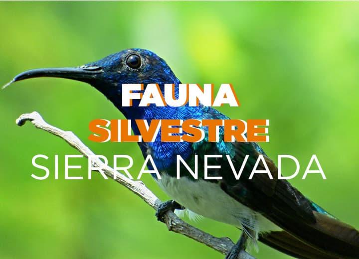 Fauna silvestre Sierra Nevada